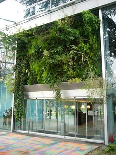 Patrick Blanc Green Wall in the Cartier Foundation for Contemporary Art in Paris Green Architecture, Landscape Architecture, Landscape Design, Vertical Planting, Vertical Garden Design, Location Paris, Vertikal Garden, Green Design, Fondation Cartier