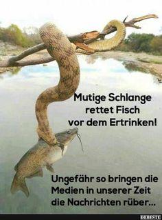 Mutige Schlange rettet Fisch vor dem Ertrinken! | Lustige Bilder, Sprüche, Witze, echt lustig