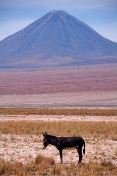 La photo du 13 octobre 2021 du site unoeilsurlaterre.com Chili, Donkeys, Photos Du, Burritos, Creatures, Mountains, Nature, Travel, Animals