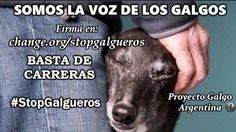 For a ban on Greyhound racing