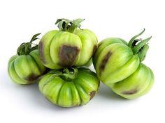 Choroby pomidorów - zestawienie
