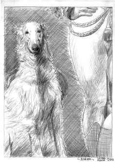 ~ Sketch of a Borzoi ~ pencil on paper 29,7x21 cm 2013