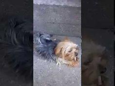 video 1472839526