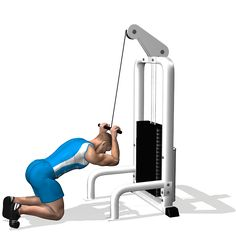 CABLE CRUNCH INVOLVED MUSCLES DURING THE TRAINING ABDOMINALS