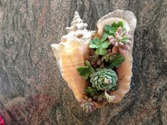 Conch Shell arrangement -   To order call (415) 686-8778 or email me at dgberger22@mindspring.com .