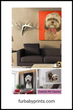 Custom Pet Canvas. Custom pet portrait illustrated and printed on a stretched canvas. Choose your background color