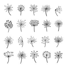 Dandelion silhouette icons - Graphics