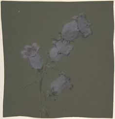 Spray of Canterbury Bells Artist: Antoine Berjon (French, Lyon 1754–1843 Lyon) Date: n.d. Medium: Purple, blue, black, and white chalk Dimensions: 10 5/8 x 9 15/16in. (27 x 25.3cm) Classification: Drawings