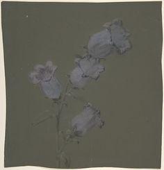 Spray of Canterbury Bells Artist: Antoine Berjon (French, Lyon 1754–1843 Lyon) Date: n.d. Medium: Purple, blue, black, and white chalk Dimensions: 10 5/8 x 9 15/16in. (27 x 25.3cm) Classification: Drawings