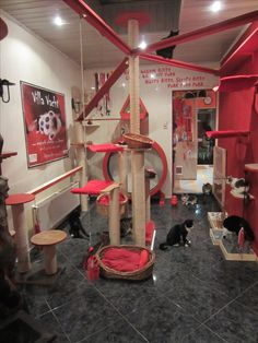 Cats playroom, with cat shelves, catwalks, catwheel, cat towers
