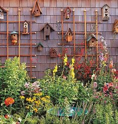 A collection of birdhouses transforms a wall of shingle siding into a fanciful focal point.    The fact that a birdhouse is normally nestled among plants in the garden makes this grouping all the more appropriate for displaying outdoors. #woodenbirdhouses #birdhousekits