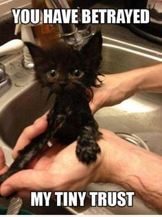 I seriously cannot comprehend why people bathe cats. They pretty much have that covered on their own.