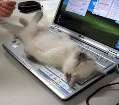 I can't respond to any emails today...something has crashed on my computer ... and the mouse is missing, too!   LOL