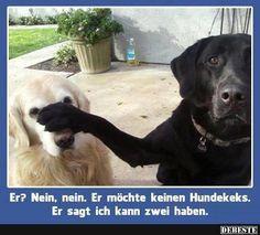Funny animal memes make me laugh - dog memes Funny Dog Photos, Funny Animal Pictures, Funny Dogs, Silly Dogs, Funny Puppies, Funny Memes, Lab Puppies, Memes Humor, Hilarious Pictures