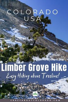 A Colorado trail not to be missed! Easy hiking through ancient trees above timberline with remarkable views. Colorado Usa, Colorado Mountains, Colorado Trail, Snowboard, Canada Travel, Usa Travel, Best Hikes, Travel Activities, Travel List