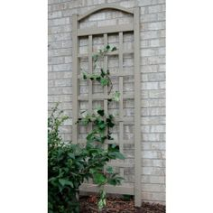 Enhance any area of your yard or patio with this Mocha Vinyl PVC Cambridge Trellis from Dura-Trel. Convenient to assemble and maintain. Wall Trellis, Arbors Trellis, Garden Trellis, Trellis Ideas, Plant Trellis, Privacy Trellis, Bamboo Trellis, Small Garden Gates, Wisteria Trellis