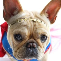Pet Accessories, Dog Toys, Cat Toys, Pet Tricks #buldog