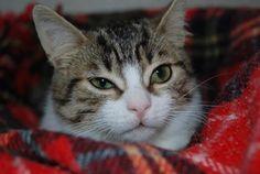 VALENTIN - Gato adoptado - AsoKa el Grande