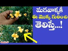Youtube Henna By A Swanhalatharaju Pinterest Telugu And Plants