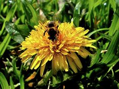 Bee by Ellie Oprea Busy Bee, Bees, Fine Art America, Nature Photography, Wall Art, Pictures, Resim, Wildlife Photography, Clip Art