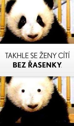 Mascara, Just For Fun, Panda Bear, Haha, Funny Pictures, Funny Memes, Animals, Quote, Humor