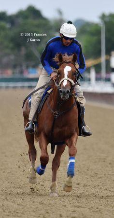Zenyatta's Tapit colt Ziconic at Belmont yesterday.