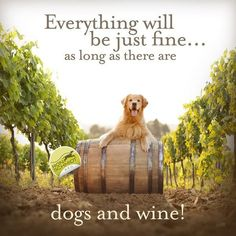 Golden Retriever Canvas by Ron Schmidt. Gifts for Dog Lovers, Gifts for Wine Lovers, Wine Art, Golden Retriever Art, Funny Wine Quotes Golden Retriever Kunst, Golden Retriever Quotes, Gold Retriever, Retriever Puppies, Golden Retriever Training, Love My Dog, Wine Quotes, Dog Quotes, Qoutes