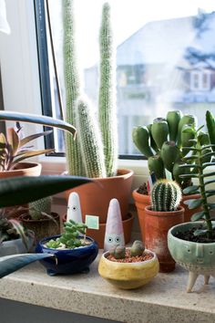 classy pictures of cactus house plants. Pilea Peperomioides in Pot  Home Houseplants Pinterest Pots and In