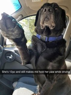 The 20 Best Funny Pictures Of Today's Internet #dogsfunnyfaces