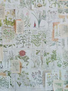 botanical illustrations http://weddingwonderland.it/2015/07/matrimonio-botanico.html