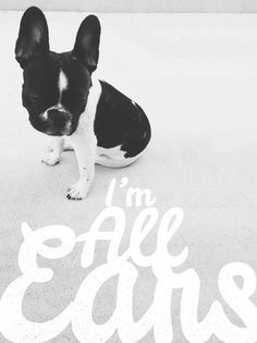 Text and cute animals Dogs Online, Daily Inspiration, Design Inspiration, Dog Quotes, Little Dogs, Mans Best Friend, Dog Life, I Love Dogs, Animal Kingdom