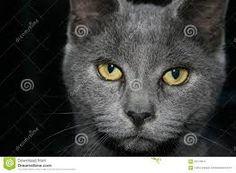Dit zou ik van de ogen willen maken. Ik vind deze ogen mooi door het ovale pupil wat erin zit en de kleur goud.