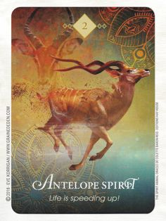 Internationally acclaimed oracle expert and bestselling author Colette Baron-Reid has created a unique oracle card deck that opens a gateway to Spirit through the archetypal energies of the living beings that share our planet. Spirit Animal Totem, Animal Spirit Guides, Animal Totems, Jena, Pet Psychic, Psychic Readings, Animal Symbolism, Animal Meanings, Oracle Tarot