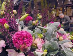 garden roses, dusty miller, and J Schwanke! I love this picture posted by Mt Eden ...