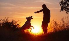 La présence d'un chien contribue à garder son propriétaire physiquement actif, à un degré comparable à une personne plus jeune d'une dizaine d'années.