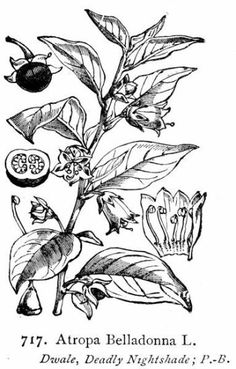 deadly flowers drawing - Google Search