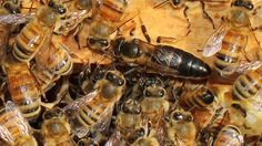 Image result for willow and bee photos, new zealand