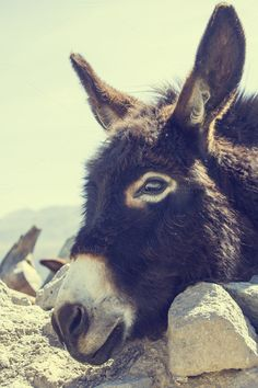 Check out Black donkey by Patricia Hofmeester on Creative Market