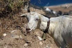 Image result for ios island greece images Santorini, Greece, Ios, Island, Animals, Image, Greece Country, Animales, Animaux