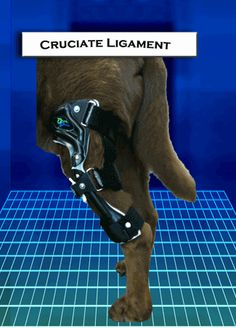 OrthoPets: Orthotic Brace or Prosthetic Device for Dog or Animal, including Stifle, Hock, Carpus, Elbow, Knee, Wrist, Ankle, or Paw