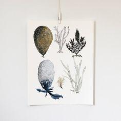 Sea Botanicals print by Katie Vernon. #SquidWhaleDesigns