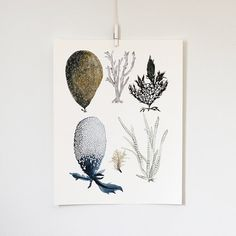 Sea Botanicals print by Katie Vernon. #SquidWhaleDesigns