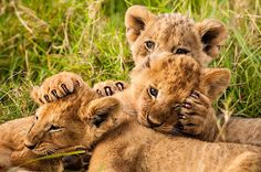 Natuur, 6 februari 2015 - Natuur op 2: Attenborough's coole kikkers