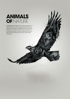 Animals of nature by Patrick Monkel, via Behance