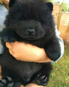 Omg it's likes like a dog bear, I'm not trying to be mean I'm just saying it's cute!!!