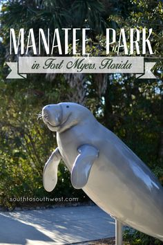 It's no secret that I've been wanting to see manatees since we moved to Florida last year....