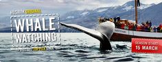 Whale Watching season start 25 march
