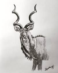 Image result for kudu sketch Moose Art, Sketch, Animals, Image, Sketch Drawing, Animales, Animaux, Sketches, Animal
