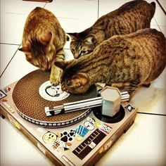 Masters of scratch! :)
