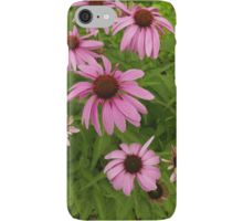 iPhone Case/Skin, Purple Coneflowers